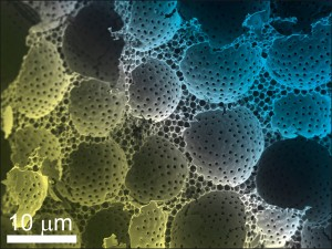 colloids-scalebar_Material-Interest_Impact03